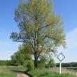 malczyce-droga-338-07