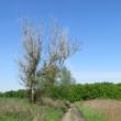 malczyce-droga-338-08