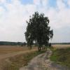 miechowa-widok-8