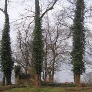 miedzyborz-cmentarz-ewangelicki-14