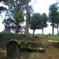 mielecin-cmentarz-ewangelicki-7