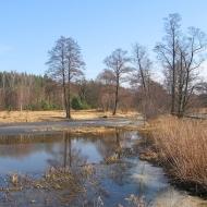murow-rzeka-budkowiczanka-rozlewisko