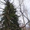 muszkowicki-las-bukowy-drzewo