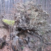 muszkowicki-las-bukowy-wykrot