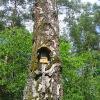 myjomice-drzewo-1