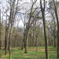 obora-arboretum-2