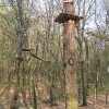 obora-arboretum-park-linowy-2