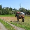 olbrachcice-wielkie-kon