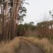 orzeszkow-rez-uroczysko-wrzosy-14
