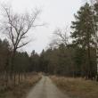 orzeszkow-rez-uroczysko-wrzosy-21