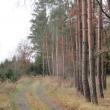 orzeszkow-rez-uroczysko-wrzosy-28