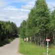 parzyn-lesno-02