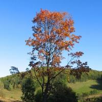 piotrowice-gorne-drzewo.jpg