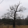 pniowiec-drzewa-3