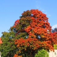 polanica-zdroj-drzewa.jpg