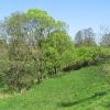 pruskow-drzewa-3