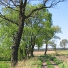 pruskow-drzewa-4