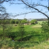 pruskow-drzewa-widok