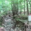 przel-pod-zamkowa-gora-las-rosenau-06