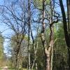 radawie-las-2
