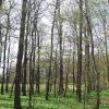 rezerwat-lezczok-las-legowy
