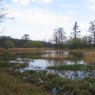 rezerwat-lezczok-staw-brzeziniak