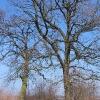 rzeczyce-drzewa-2