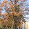 sadowice-drzewa