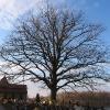 sierakowice-kosciol-drzewo-1
