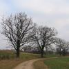 sieroty-drzewa