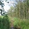 sokolowice-uzytek-ekologiczny-olsy-sokolowickie-2