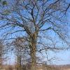 stawy-krzywa-gora-drzewo