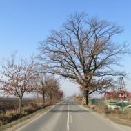 swieta-katarzyna-smardzow-01
