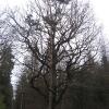 swibie-lesniczowka-drzewa