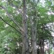 1771-73-szczawno-zdroj-park-zdrojowy-buki-5