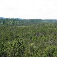 torfowisko-pod-zielencem-widok-z-wiezy-2.jpg
