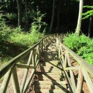 trzebnica-las-bukowy-14