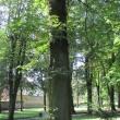 2026-trzebnica-park-miejski-lipy-01