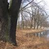 tworog-zalew-drzewa-3