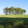 wachowice-drzewa
