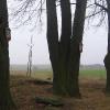 wisnicze-kaplica-w-goju-drzewa
