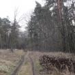 wydmy-wolow-19