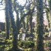 zabrze-cmentarz-zydowski-1