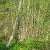 zatwarnica-dolina-rzeki-widok-4