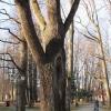zywiec-park-zamkowy-4
