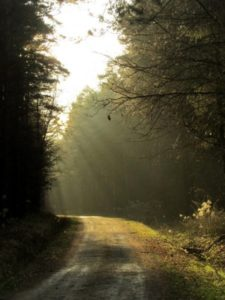 Szlak zielony rowerowy Krzyżanowice - Malin - Pierwoszów