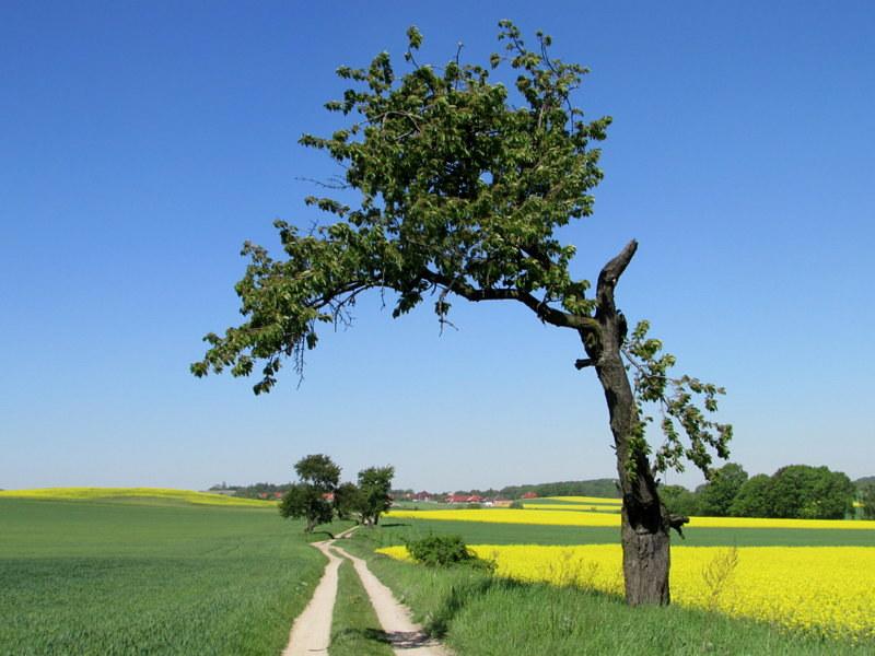 Szlak czerwony Oborniki Śląskie – Piekary – Trzebnica