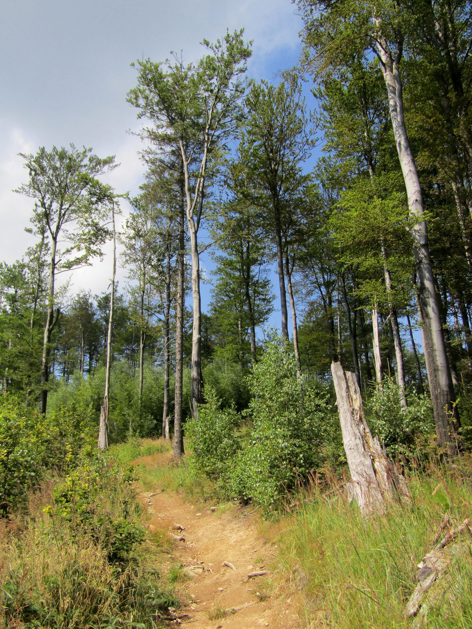 Trasa 9 Bielawa – Przełęcz Woliborska – Bielawska Polanka – Bielawa