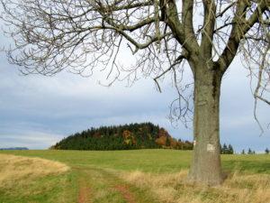 Trasa 25 Nowa Ruda – Pardelówka – Włodzicka Góra – Świerki Dolne
